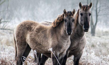 Pferde für die Artenvielfalt