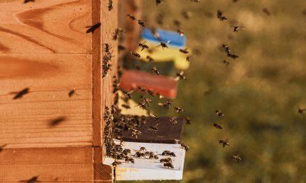 Verschärfte Regeln für Bienenzüchter