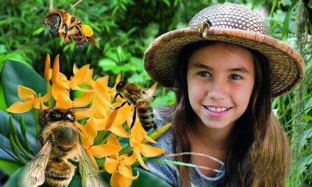 """Einladung zur Sonderausstellung """"Mein Schwarm: Die Biene"""" in der Biosphäre"""