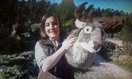 Mit dem Hirsch auf der Pirsch