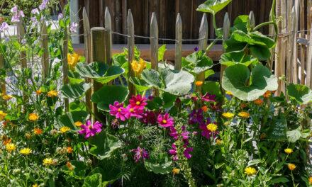 Umweltprojekt Garten