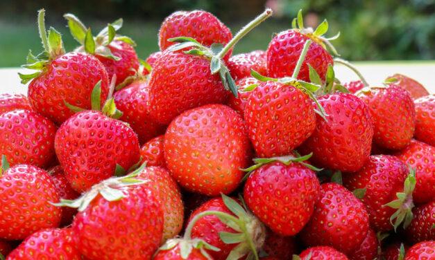Die kleine Erdbeerlehre