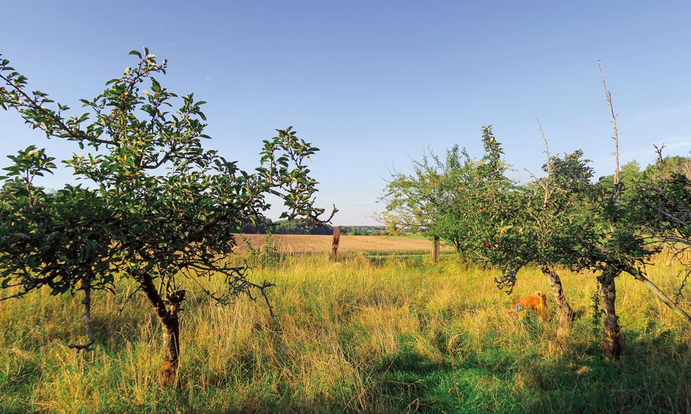 Die alten Obstwiesen in unmittelbarer Nähe der geplanten Raststätte – ein Biotop für seltene Vögel.