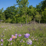 Bürgerinitiative kämpft für Biotop im Potsdamer Remisenpark