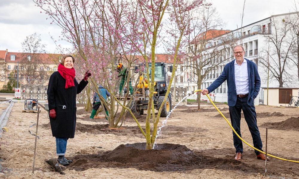 Sigrun Rabbe und Bert Nicke vom Sanierungsträger Potsdam starten mit der Pflege der neuen Bäume