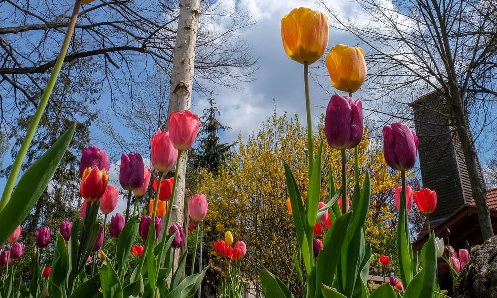 In Satzkorn entsteht ein Blumenmeer