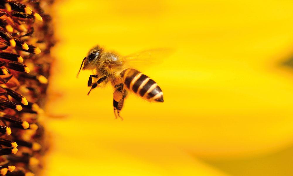 Kann die Bienenseuche räumlich eingegrenzt werden?