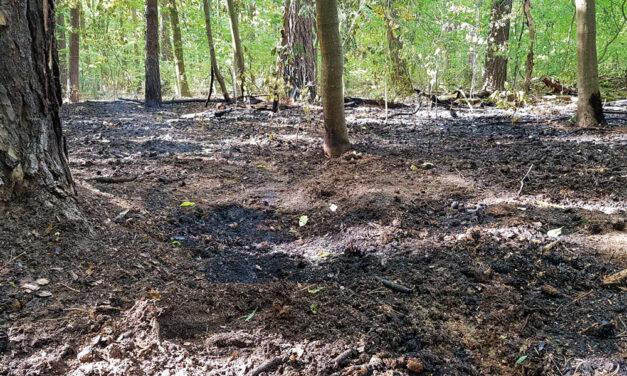 Waldbrand im Königswald