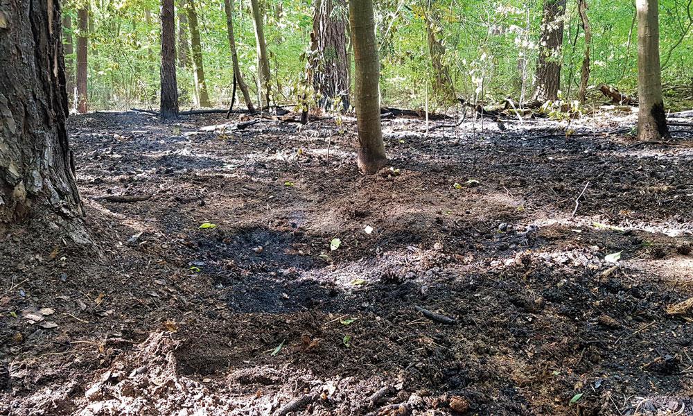 Je weniger am Sacrower See und im Königswald kontrolliert wird, desto höher ist die Gefahr von Waldbränden.