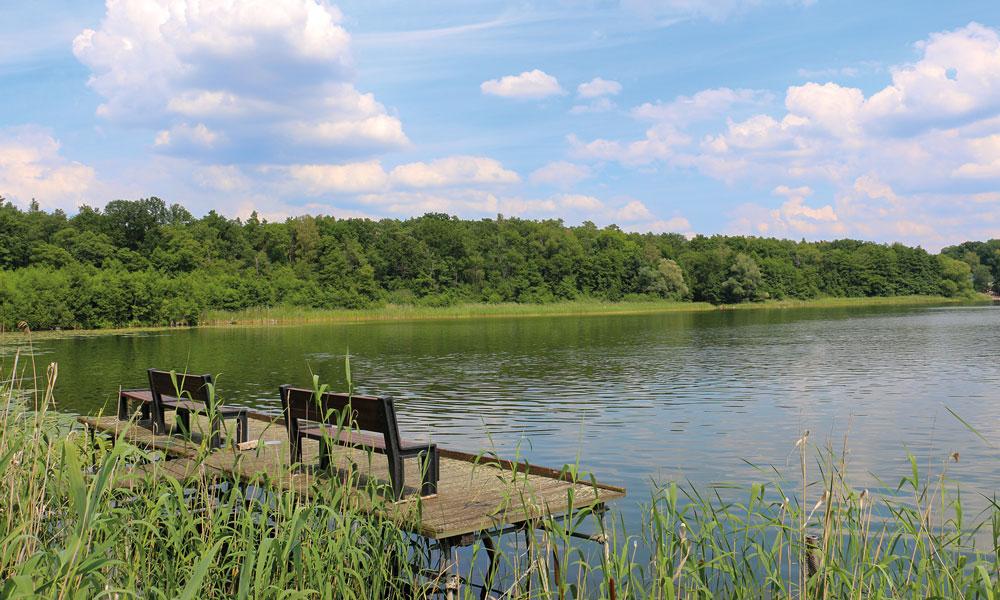 Der Sacrower See braucht Hilfe, wenn er weiterhin existieren soll